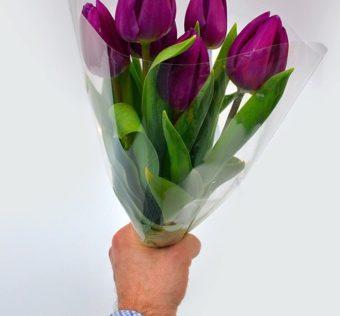 tulip-3191450_960_720