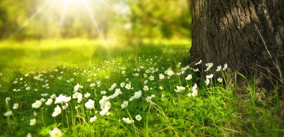 Тепло и дожди ожидаются на этой неделе в Прикамье
